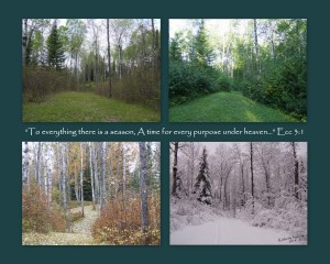 The four seasons represented in a photograph taken approximately at the same spot on our property