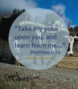 Matthew 1129