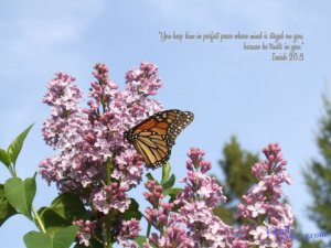 Monarch Butterfly on Lilacs